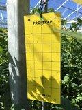 Pro Trap Yellow Wet_