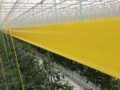 Pro Trap Yellow Signaalrol (100 m x 15 cm)